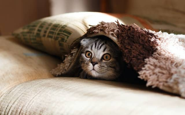 pet supplies dropshipping
